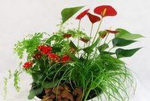 Plantas / Fotos de plantas del Quiosco de flores de la Plaza de los Sitios de Zaragoza