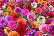 Inspiration &  Beauty / All things BRIGHT & BEAUTIFUL!   An opportunity to pause and enjoy all that is around us.