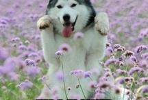 Pets & Pet Humor & Animals / by Mimosa Dawn