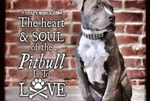 I love pit bulls! Proud Mom of Shiloh Girl. / by Debra Caruso