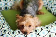 Furry Friends / Pet loving projects, recipes & info.