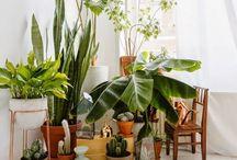 G R E E N   pots & plants