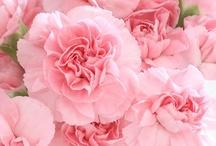 Pink / by Pamela Voges