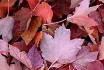Autumn / by Pamela Voges