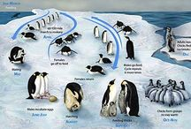 THE ARCTIC / ANTARCTICA / Fun and educational activities for teaching kids ages 0-10 about the Arctic and Antarctica.