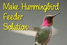 Hummingbird,Birds, Attracting Butterflies, / by Roberta Belwood