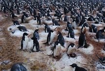 ANTARCTICA / I want to thank all Pinners who shared their pins,and made it possible for me to bring you this board ! / by Rosa Bood