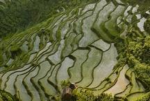 Au Natural / Rice around the world.
