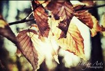 Indigo Arts Photography (My Photography)