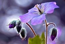 Plant Photography / by sharon parfett