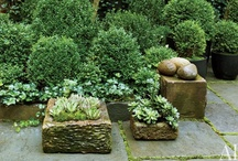 Container Gardening / Lots of ideas for planting in containers throughout the year.