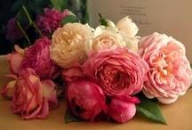 roses... / by sharon parfett
