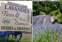 Lavender... / by sharon parfett