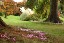 Autumn at Wakehurst  / by sharon parfett
