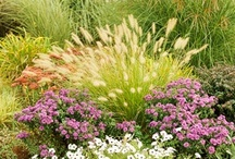 Planting with Ornamental Grasses / by sharon parfett