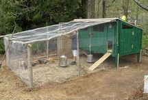 Self Sufficient - Survive It All / Post your self sufficiency photos here. Chickens, solar, gardening, aquaponics, solar, off the grid, anything that pertains to self sufficiency! Follow us on Facebook: facebook.com/surviveitall2  DO NOT post pins about things unrelated to self sufficiency, guns, gun control, politics or religion.