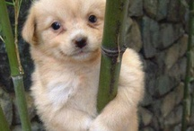 """some cute & humorous things. / """"AWW"""" & """"LOL"""" moments :)"""