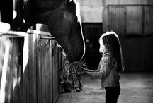 """Equestrianism :) / That """"little girl"""" in all of us still loves this beautiful animal <3. Encourage fellow pinners (riders) to follow this board! Much love xx"""