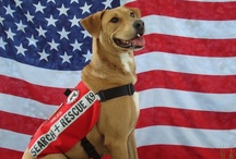 Dogs: Heroes, Survivors, Military & Working Dogs / This board is for special pooches who prove that dogs are oftentimes better than humans, are brave, are worthy of respect, are loyal to a fault, and will give their lives to save others. / by Erika Blake