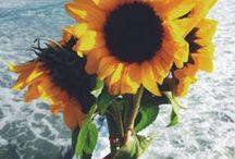FLOWERS / by Jillian Elaine
