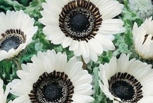 black + white themed garden / flowers and plants for a black and white themed garden. / by Jeannie C