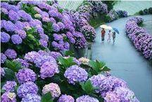 Florals + Spring