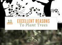 Tree Science