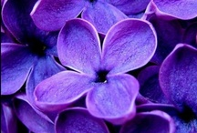 Visual Source Files - Lovely Lavendar / by GlamazonGirls Glow