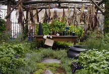 Garden....Ideas and Insect Products