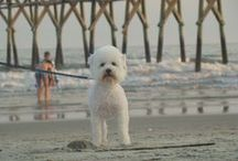 Pets at the Beach