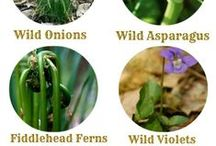 Herbs and Medicine in the Outdoors / Herbal remedies, plant identification, foraging, first aid
