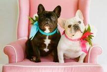 Cachorros / Os bichinhos mais dóceis do mundo