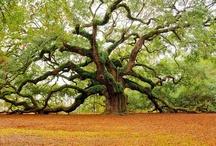 Trees :) / by Linda Crooms