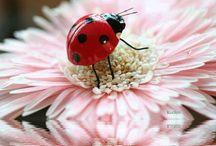 Lovely bloom