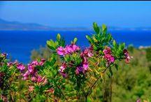 """Echi di primavera / """"Se non ci fosse l'inverno, la primavera non sarebbe così piacevole: se non provassimo l'avversità, il successo non sarebbe tanto apprezzato."""" cit. Anne Bradstreet.  #Sardegna #CostaSmeralda"""