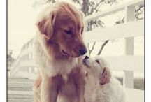 Furry Friends! / It's pretty clear what my favorite dog breed is :) / by Hailey Appenzeller