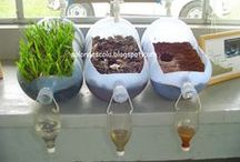 Scientific Investigation in the Classroom / Science instruction and activities