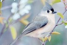 Birds / None / by Jyotika Purwar