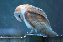 My Owls / by Cheyanne Cortez
