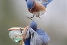Birds / by Jackie Jones