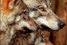 Wolves / by Jackie Jones