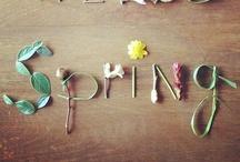 Seasons // Spring