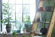 Greenery / Plants bring me so much happiness and truly bring life to an indoor space.