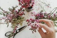 Full Bloom / Floral Arrangements