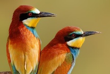 birds / by Denise