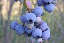 Blueberries / by Denise