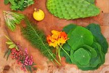 REWILD / Nourish your BEing with the pure GOODness Gaia has to offer in abundance.