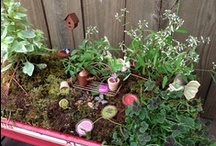 fairy garden terrarium / Fairy garden, terrarium, gnome home- whatever you call them they're fun