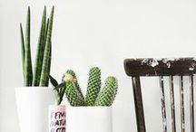Cacti & Succulents / Cactus and Succulents.