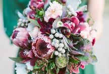 Floral / Beautiful Fresh Flowers and Bouquets.